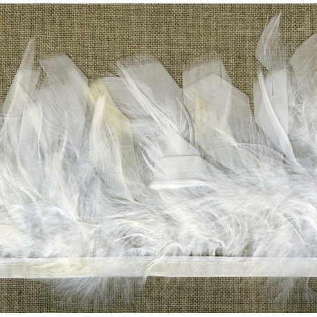 Strip of feathers Cabaret on satin ribbon col. White 01